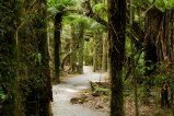 Haast-Pass-New-Zealand-adventure-hiking-forest