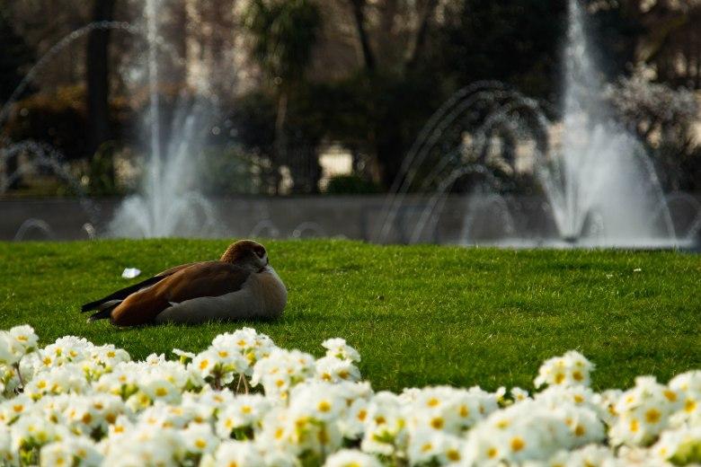 London-parks-londonparks-
