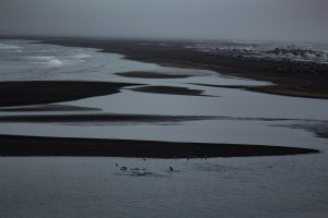 seals - Black Sands - Iceland - Landscape