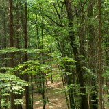 Saxonswitzerland-hiking-germany-forest-trail