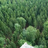 Saxonswitzerland-hiking-germany-forest-trees