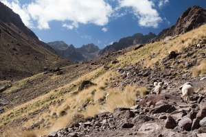 Morocco-mountain-4000m-northafrica-toubkal-atlas-mountains-sheep-valley-hike